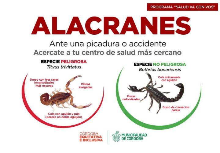 alacranes-1024x711